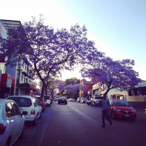 Jacaranda Tree Perth
