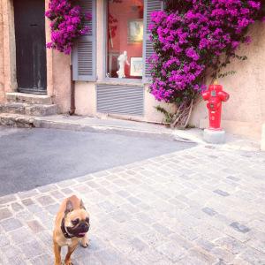 St Tropez 1.mvc